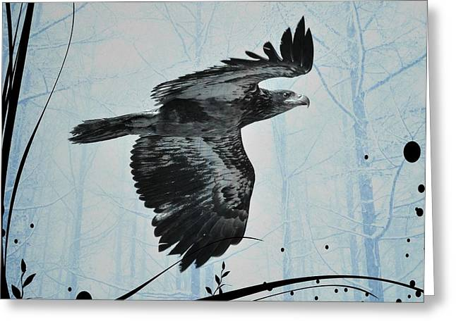 Eagle Images Greeting Cards - Young Bald Eagle Greeting Card by Debra  Miller