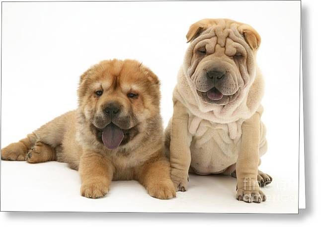 Puppies Photographs Greeting Cards - Young Dogs Greeting Card by Jane Burton