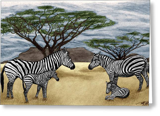 Pencil Greeting Cards - Zebra African Outback  Greeting Card by Peter Piatt