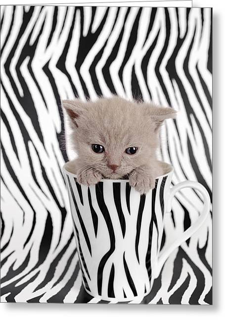 Zebra Cat Greeting Card by Waldek Dabrowski