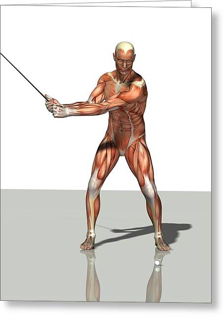 Recently Sold -  - Biology Greeting Cards - Male Muscles, Artwork Greeting Card by Friedrich Saurer