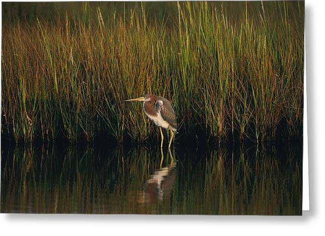 Eastern Shore Greeting Cards - Untitled Greeting Card by Robert Madden
