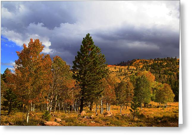 Brown Framed Prints Greeting Cards - Rocky Mountain Fall Greeting Card by Mark Smith