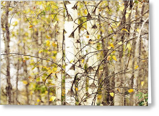 Birch Tree Greeting Cards - Autumn Series Greeting Card by HD Connelly