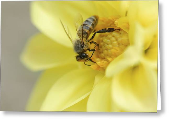Close Focus Nature Scene Greeting Cards - Bee Greeting Card by Igor Sinitsyn