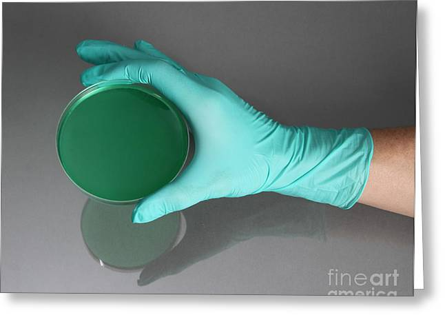 Agar Greeting Cards - Hand Holding Petri Dish Greeting Card by Photo Researchers