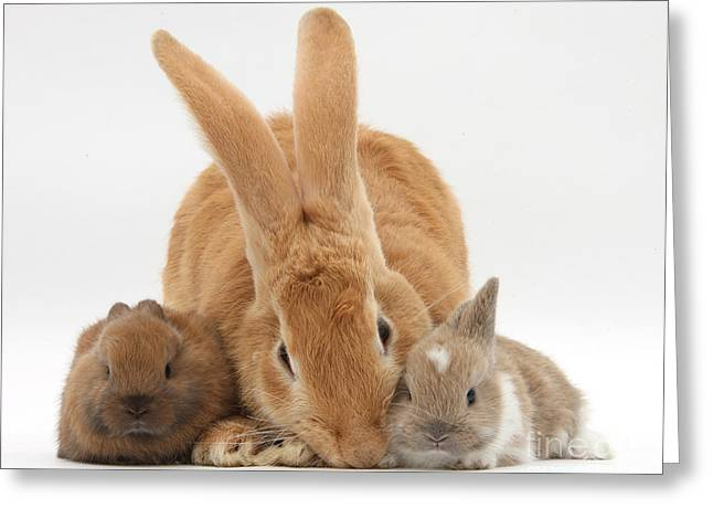 Cross Breed Greeting Cards - Rabbits Greeting Card by Mark Taylor