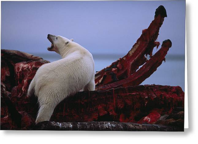 Untitled Greeting Card by National Geographic