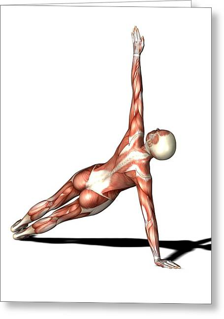 Conscious Greeting Cards - Female Muscles, Artwork Greeting Card by Friedrich Saurer