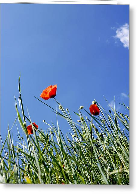 Growth Greeting Cards - Field of poppies Greeting Card by Bernard Jaubert
