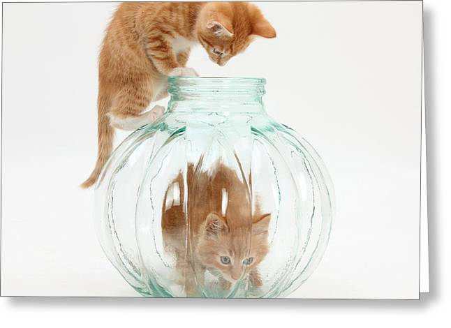 Glass Vase Greeting Cards - Kittens Greeting Card by Mark Taylor