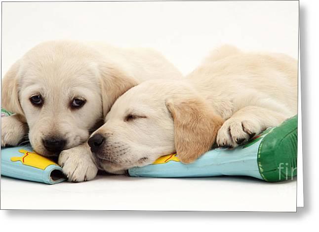 Sleeping Baby Animal Greeting Cards - Puppies Greeting Card by Jane Burton