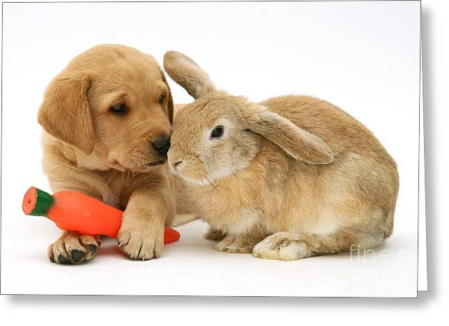 Toy Dog Greeting Cards - Rabbit And Puppy Greeting Card by Jane Burton