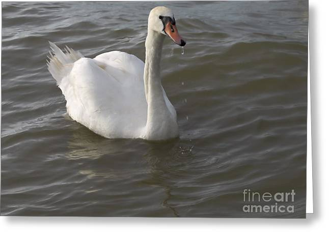 Blue Green Wave Greeting Cards - Swan Greeting Card by Odon Czintos