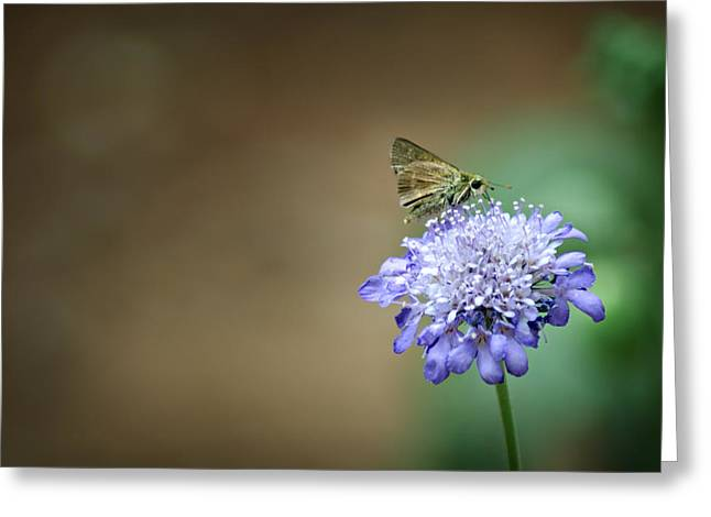 1205-8785 Skipper on a Butterfly Blue Pincushion Flower Greeting Card by Randy Forrester