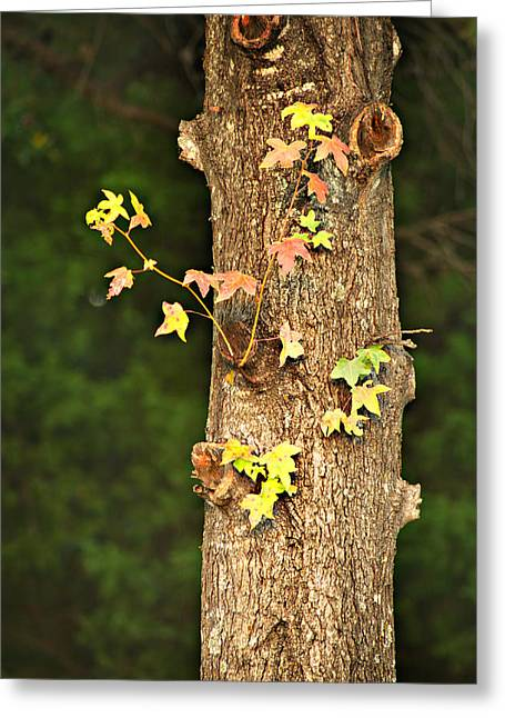 Arkansas Greeting Cards - 1209-0859 September Tease Greeting Card by Randy Forrester