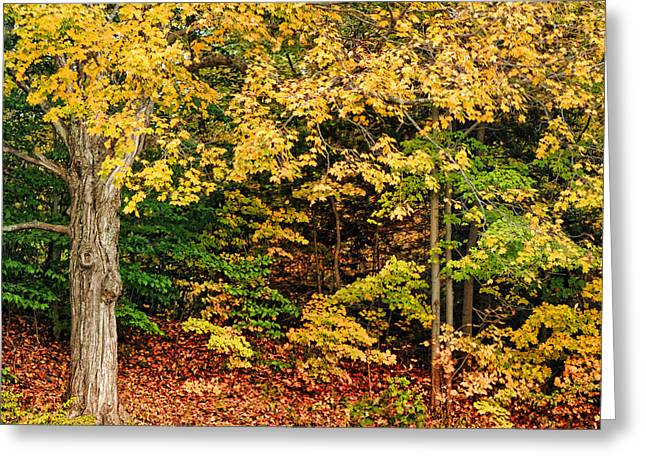 Scenic New England Greeting Cards - Autumn Series Greeting Card by HD Connelly