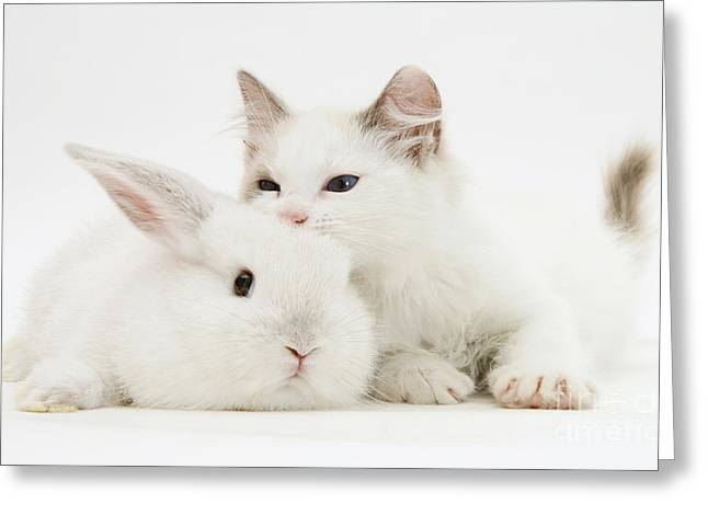 Colorpoint Greeting Cards - Rabbit And Kitten Greeting Card by Jane Burton