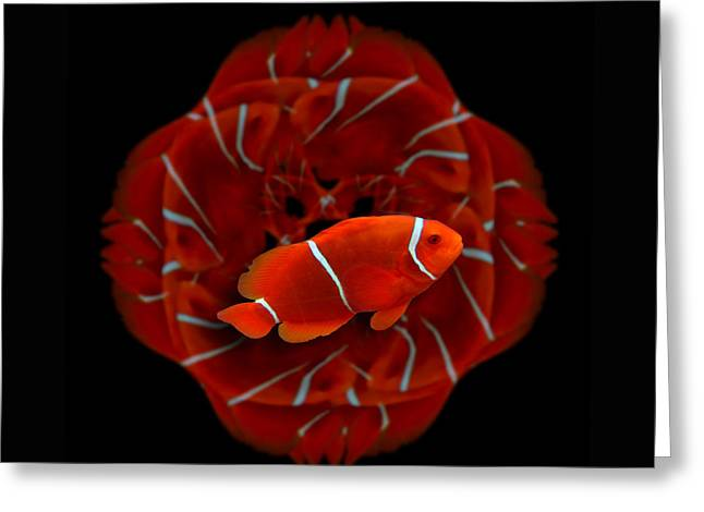 Clown Fish Greeting Cards - 143 Greeting Card by Peter Holme III