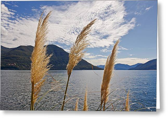 Lago Greeting Cards - Lake Maggiore Greeting Card by Joana Kruse