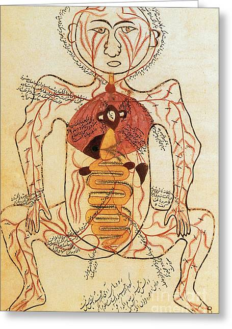 History Of Medicine Greeting Cards - 15th Century Anatomical Drawing Greeting Card by Photo Researchers