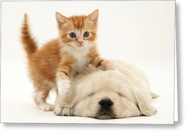 Sleeping Baby Animal Greeting Cards - Kitten And Puppy Greeting Card by Jane Burton