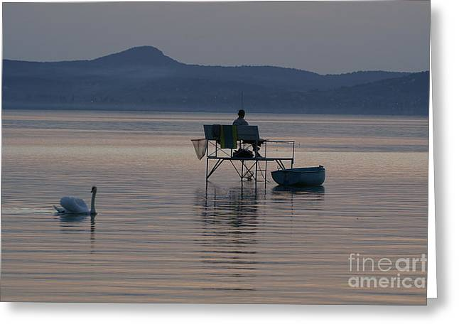 Sweating Photographs Greeting Cards - Swan Greeting Card by Odon Czintos