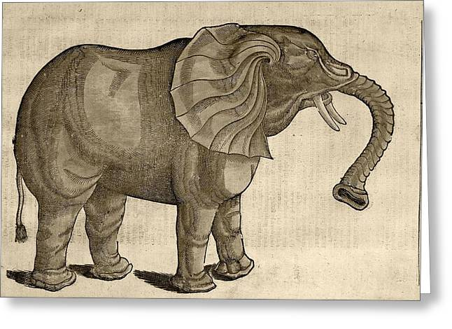 Folk Lore Greeting Cards - 1607 Elephant By Topsell Age Toned Greeting Card by Paul D Stewart