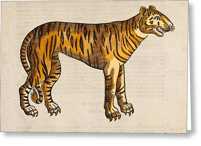 Folk Lore Greeting Cards - 1607 Tiger By Topsell Greeting Card by Paul D Stewart