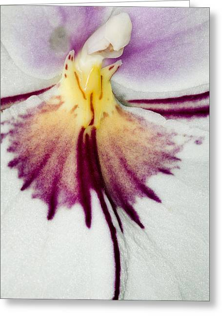 Phalus Greeting Cards - Exotic Orchid Flowers of C Ribet Greeting Card by C Ribet