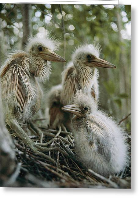Bird Rookery Swamp Greeting Cards - Untitled Greeting Card by Sam Abell