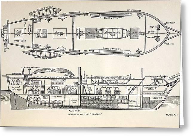 Beagle Artwork Greeting Cards - 1832 Darwins Ship Hms Beagle Plan Greeting Card by Paul D Stewart
