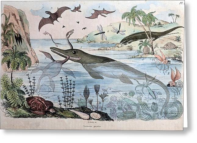 1834 Guerin Engraving 'extinct Animals Greeting Card by Paul D Stewart