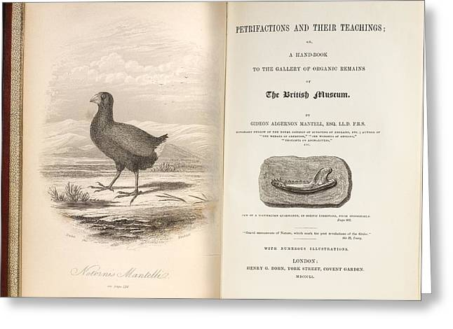 Moa Greeting Cards - 1851 Takahe Mantells Petrifactions Book Greeting Card by Paul D Stewart