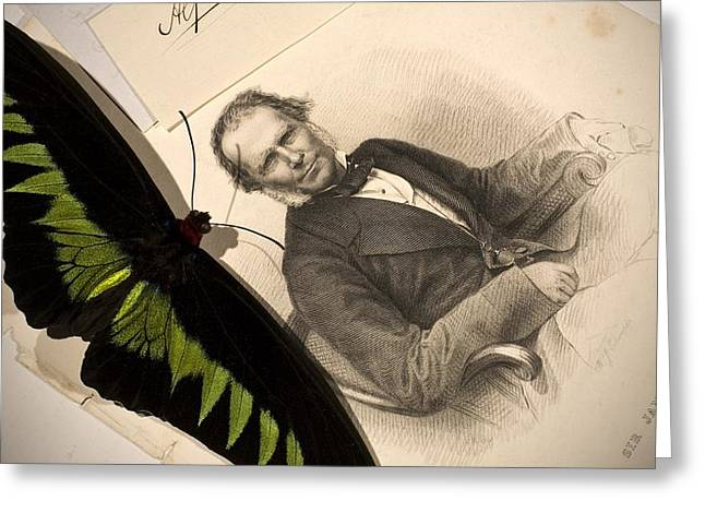Brookes Greeting Cards - 1855 Wallace & Rajah Brookes Birdwing Greeting Card by Paul D Stewart
