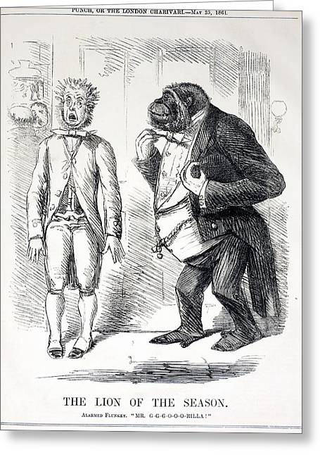 Cartoon Lion Greeting Cards - 1861 Punch Gorilla Cartoon Greeting Card by Paul D Stewart