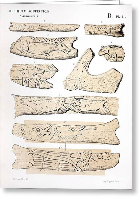 Upper Paleolithic Greeting Cards - 1863 Lartet Prehistoric Animal Carving Greeting Card by Paul D Stewart