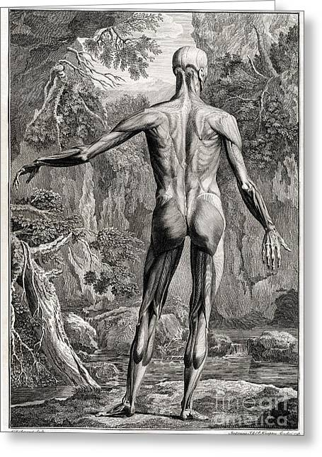 18th Century Greeting Cards - 18th Century Anatomical Engraving Greeting Card by Science Source