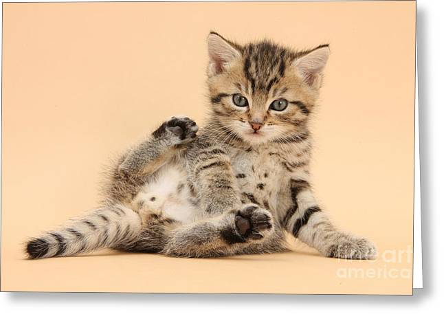 Cat On Back Greeting Cards - Tabby Kitten Greeting Card by Mark Taylor
