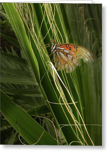 Buterfly Greeting Cards - 1924 Greeting Card by Peter Holme III