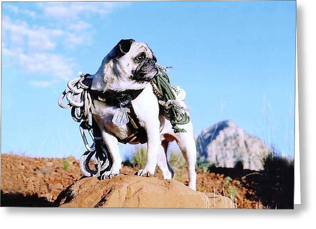 Brigade Greeting Cards - 1Lt Vincent Thomas Pug U S Army Engineer Corps Greeting Card by Allen Kimble jr