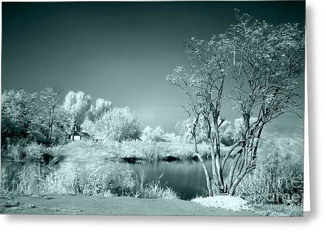 Sweating Photographs Greeting Cards -  Infra red Greeting Card by Odon Czintos