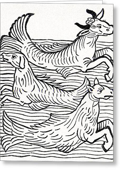 Sea Dog Prints Greeting Cards - 15th Century German Woodcut Print Greeting Card by Cci Archives