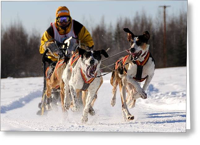 Sled Dog Greeting Cards - 2011 Limited North American Sled Dog Race Greeting Card by Gary Whitton