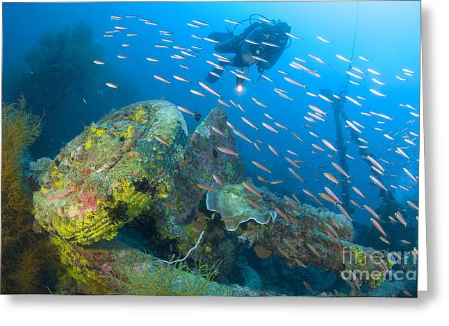 Japanese School Greeting Cards - A Diver Explores The Wreck Greeting Card by Steve Jones