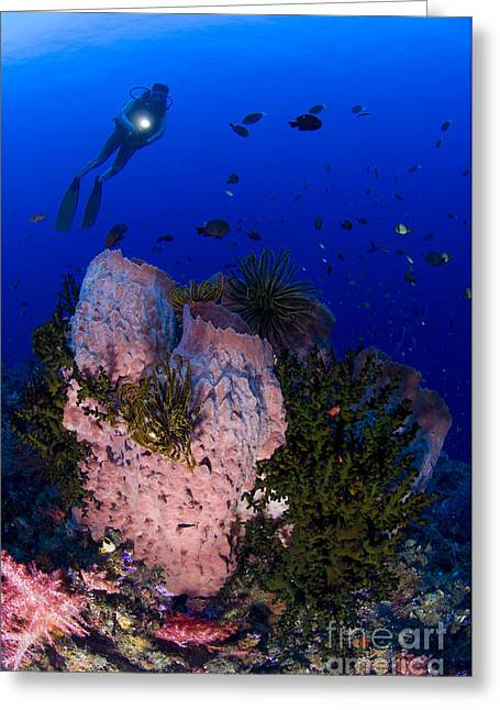 Siliceous Greeting Cards - A Diver Looks On At A Giant Barrel Greeting Card by Steve Jones