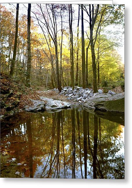 Plant Physiology Greeting Cards - A Woodland View At Long Branch Nature Greeting Card by Rex A. Stucky