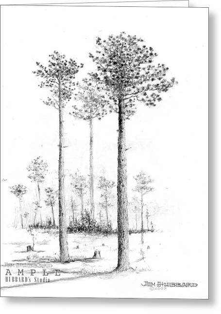 Alabama Drawings Greeting Cards - Alabama - Southern Longleaf Pine Greeting Card by Jim Hubbard