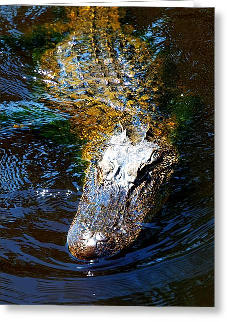 Alligator In Mississippi River Greeting Card by Paul Ge
