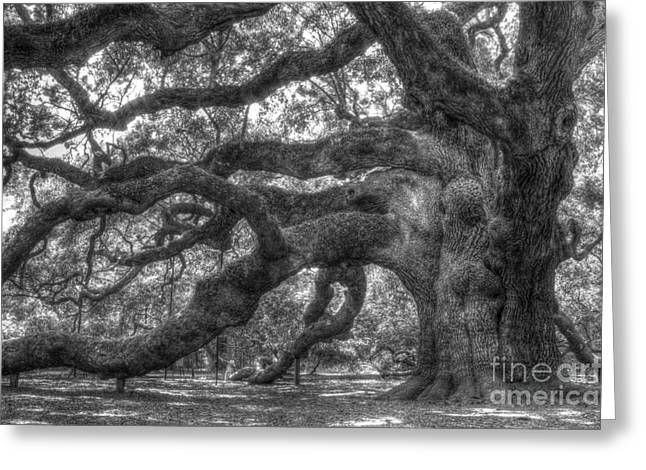 Oak Tree Greeting Cards - Angel Oak Tree Charleston SC Greeting Card by Dustin K Ryan